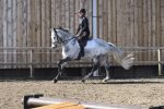 Scooby in training 150x100 - New Sponsor for the New Season for HMB Equestrian
