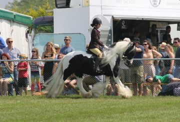 5 Jack after please credit Janet Figg 360x245 - Abandoned fly grazing cob qualifies for Hickstead Royal International