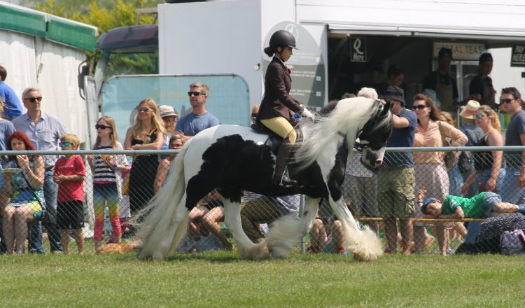 5 Jack after please credit Janet Figg 750x440 - Abandoned fly grazing cob qualifies for Hickstead Royal International