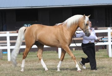 Palomino Society 360x245 - Meet British Palomino Society Chairman and Long Standing Judge Colin Bramley-Robins