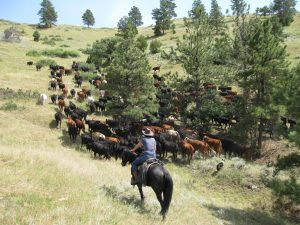 cattle drive New Haven Ranch Wyoming 300x225 - How To Saddle Up On More Challenging Trails For Less