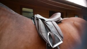It is almost invisible under the saddle 300x169 - It's A V.I.P For A Reason : The Equestrian Life Review