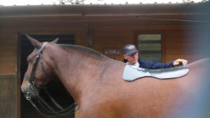The fit is really slimline on the horses back 300x169 - It's A V.I.P For A Reason : The Equestrian Life Review