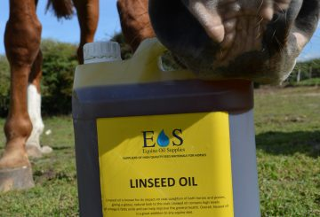 Linseed 6 1 360x245 - Why should linseed oil be a part of daily feed?