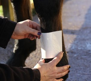 The primary layer is a wound dressing that is placed on top of the wound 300x265 - The Three Stages of Bandaging