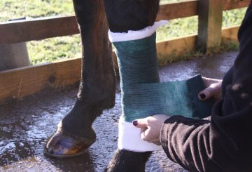 The tertiary layer is the application of a bandage to hold the first two layers in place and apply additional pressure and protection 360x245 - The Three Stages of Bandaging