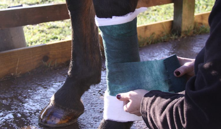 The tertiary layer is the application of a bandage to hold the first two layers in place and apply additional pressure and protection 750x440 - The Three Stages of Bandaging