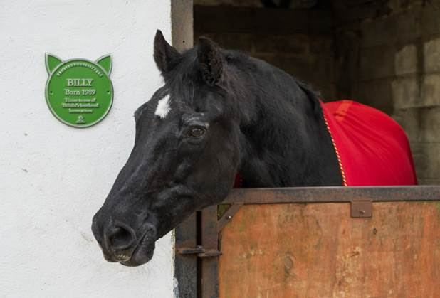 pet plaque - The world's first commemorative 'Pet Plaque' programme launches in the UK to celebrate our amazing animals