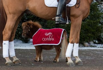 The Stars OlympiaTLIHS PN18 200046 360x245 - The animals arrive two-by-two for Olympia, The International Horse Show