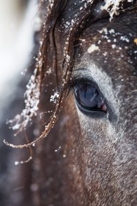 Winter horse care  200x300 - How horses adapt to winter conditions