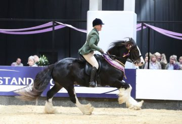 SEIB Search for a Star Working Show Horse 2017 winner 5 360x245 - Traditional Gypsy Cobs are to have their moment to shine at Horse of the Year Show