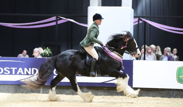 SEIB Search for a Star Working Show Horse 2017 winner 5 750x440 - Traditional Gypsy Cobs are to have their moment to shine at Horse of the Year Show