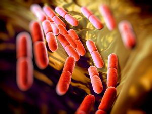 bacteria 300x225 - Prevention is better than cure with Haygain