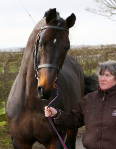 Cobra 18 Gladys McArdle 233x300 - Cobra18 – a huge loss to sport horse breeding