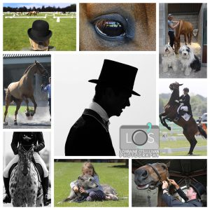 Collage 300x300 - Tattersalls - Book tickets today and save up to 10% off booking price