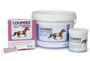 Coopers Gut Range 360x245 - Coopers® Gut Survey Finds Over Half of Horse Owners Use Gut Supplements to Help Improve Equine Health
