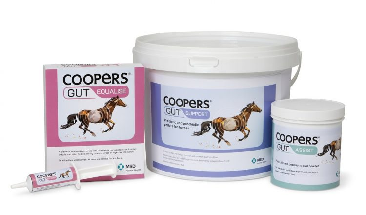 Coopers Gut Range 750x440 - Coopers® Gut Survey Finds Over Half of Horse Owners Use Gut Supplements to Help Improve Equine Health