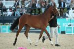 2019 Auction Yearling Bambalina 150x100 - A Night to Remember at the Bolesworth Elite Yearling Auction