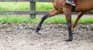 TopRide 300x161 - Cotswold based racehorse trainers launch equestrian surface company