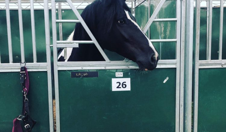 IMG 0720 750x440 - The Equifest Diaries....
