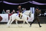 Colne and The Feed Shed Mountain Moorland Mini Pony of the Year Van Der Vaart ridden by Lilly Richardson © 1s... 150x100 - Thistledown Van-Der-Vaart makes HOYS history in the Colne and The Feed Shed Mountain & Moorland Mini Pony of the Year