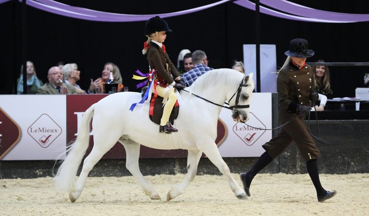 Colne and The Feed Shed Mountain Moorland Mini Pony of the Year Van Der Vaart ridden by Lilly Richardson © 1s... 750x440 - Thistledown Van-Der-Vaart makes HOYS history in the Colne and The Feed Shed Mountain & Moorland Mini Pony of the Year
