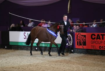 Cuddy Supreme In Hand Champion Matt McGivern handling Heronsmill Tiger Lily © 1st Class Images 360x245 - Cuddy Supreme In-Hand Champions follow in family footsteps at HOYS