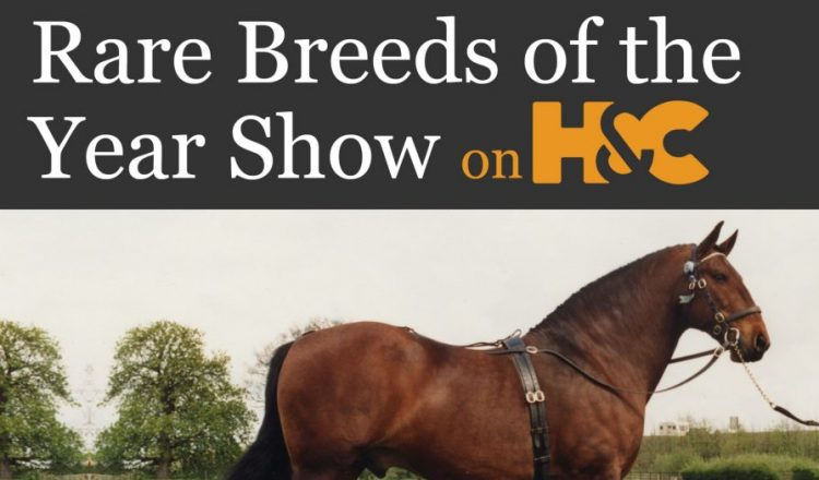 Rare Breeds e1570123049865 750x440 - Live Showing Action from Arena UK on Horse & Country