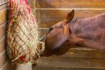 Stabled horse  150x100 - Horse health company Haygain take a look at the ways we can keep our horses happy and comfortable when they are stabled in the winter.