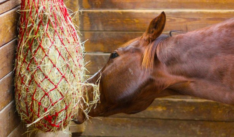 Stabled horse  750x440 - Horse health company Haygain take a look at the ways we can keep our horses happy and comfortable when they are stabled in the winter.