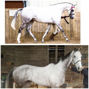 before and after 300x300 - BLOGS