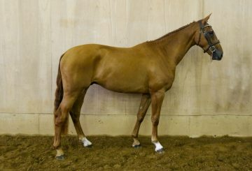 MBF Desert Dancer 011 360x245 - Monart Sale : Top lot sold to world number 1