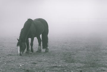 horse winter 360x245 - The Hidden Health Issue Compromising Your Horse This Winter