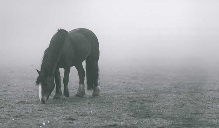 horse winter 750x440 - The Hidden Health Issue Compromising Your Horse This Winter