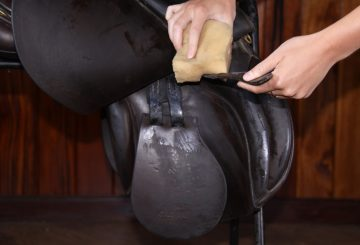 cleaning 360x245 - Keeping Saddlery in Good Repair!