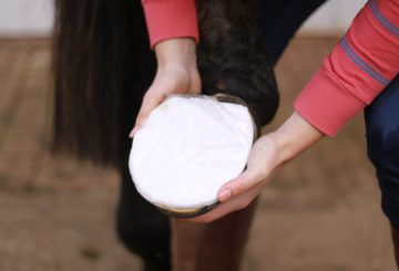 Hot wet poultice can be used to treat abscesses. 360x245 - On the Hoof