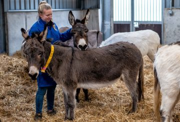 Rehoming Unit The Donkey Sanctuary 360x245 - Donkey 'finishing school' aids charity's Rehoming goal