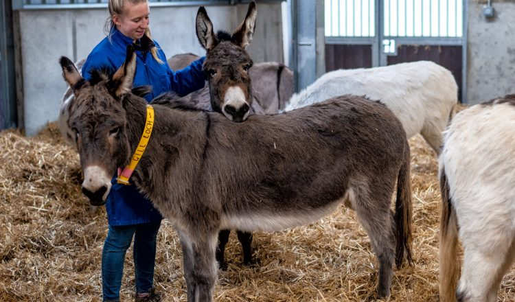 Rehoming Unit The Donkey Sanctuary 750x440 - Donkey 'finishing school' aids charity's Rehoming goal