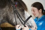 Horse riding has been shown to have both immediate and long term benefits for both adults and children living with autism. 150x100 - The Profound Effect of Horses on Autistic Riders