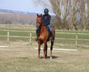 A good square halt is really important and well worth practising in training. 300x242 - Dressage Accuracy with Harriet Morris-Baumber