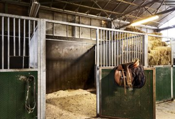 Actons 360x245 - The National Minimum Wage and The Equestrian Sector