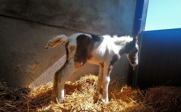Lisa Needs 707x440 - Abandoned Foal Makes Good Progress
