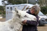 Snowy enjoys a cuddle with groom Kelly Bramley The Donkey Sanctuary 150x100 - Suspected sarcoid meant urgent treatment for Snowy the donkey
