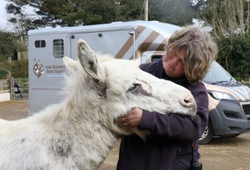 Snowy enjoys a cuddle with groom Kelly Bramley The Donkey Sanctuary 360x245 - Suspected sarcoid meant urgent treatment for Snowy the donkey