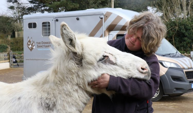 Snowy enjoys a cuddle with groom Kelly Bramley The Donkey Sanctuary 750x440 - Suspected sarcoid meant urgent treatment for Snowy the donkey