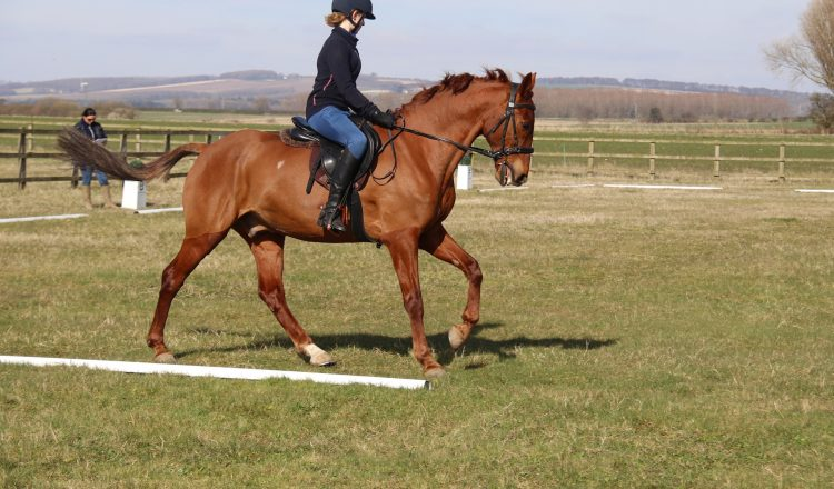 Working on accuracy in your dressage test is a sure fire way to improve your marks 1 750x440 - Dressage Accuracy with Harriet Morris-Baumber