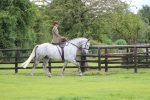 IMG 9519 150x100 - Ever wanted to have a go riding Side Saddle?
