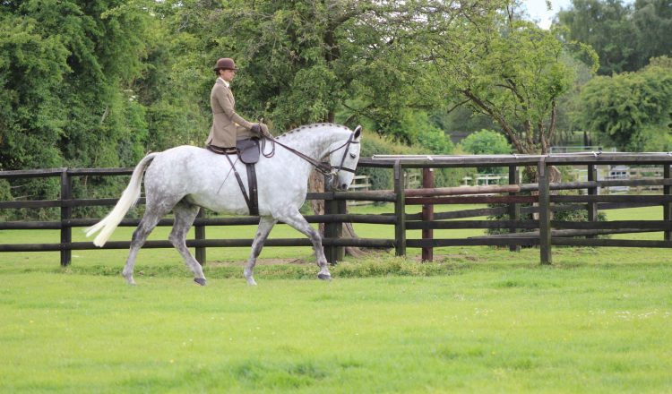 IMG 9519 750x440 - Ever wanted to have a go riding Side Saddle?