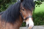 Lottie 3ss 150x100 - Appeal for Missing Charity Pony