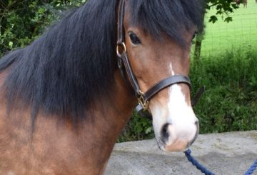 Lottie 3ss 360x245 - Appeal for Missing Charity Pony
